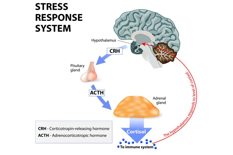 Central Nervous System & Immune System